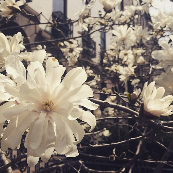 flowerpowers